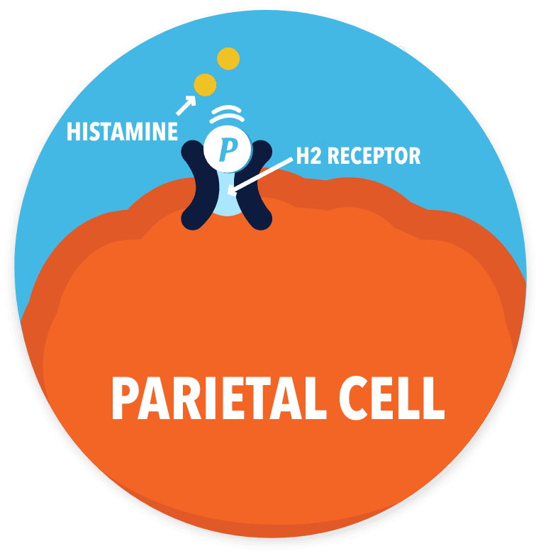 drawing of parietal cell with Pepcid working on H2 receptor